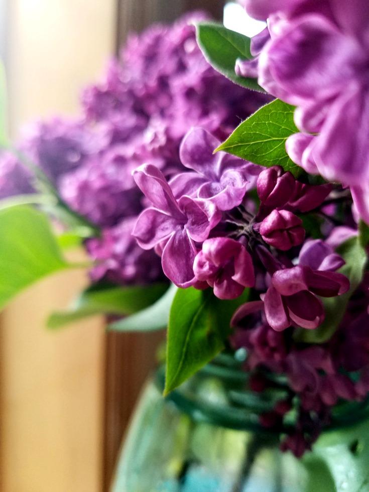 Lilacs 3 sm RB
